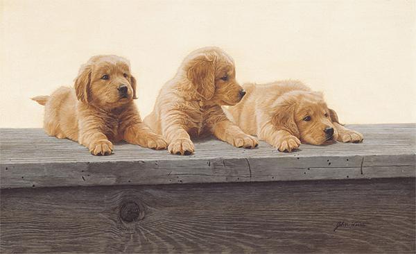 Golden Retriever Puppies by John Weiss
