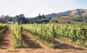 The Vineyard Before the Harvest